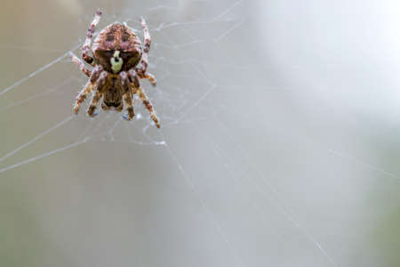 the big spider crawls on the web Stock Photo