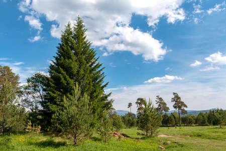 dense, pristine, untouched forest in the highlands