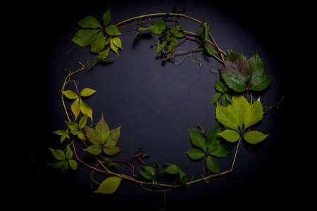 wild grape leaves on a black background i