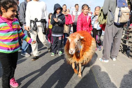 ISTANBUL, TURKEY - NOVEMBER 15, 2015: Sheep over Bosphorus Bridge during 37th Istanbul Marathon. More than 100000 people attended to marathon, 15K, 10K and fun run. Editorial