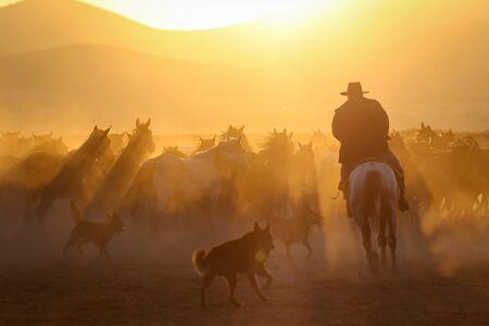 Yilki Horses Running in Field, Kayseri City, Turkey