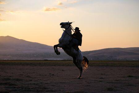 Horse Rearing in Field Kayseri City, Turkey 免版税图像
