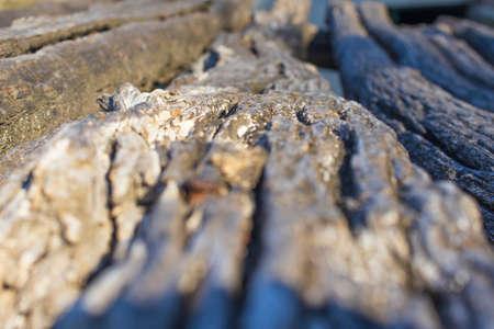 deep shot of old cut wood log Imagens