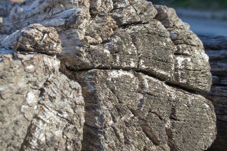 veined version of old cut wood log
