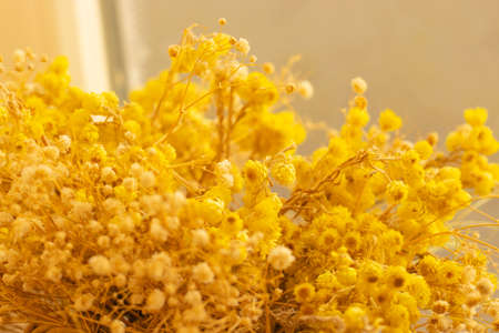 dried yellow mountain flowers used in domestic decoration 写真素材