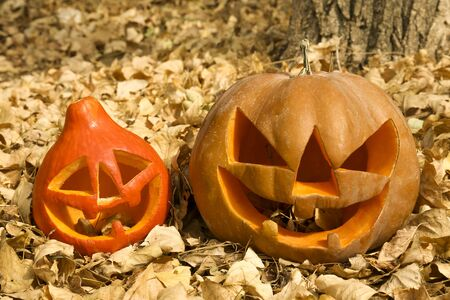 Few orange pumpkins of different size carved into Jack o Lantern on dead leaves. Background, copy space, close up, top view. All hallows eve Halloween party decoration. Trick or treat concept. Stok Fotoğraf