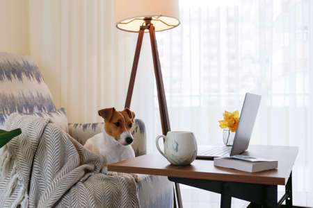 Home office concept. Designated work from home area in living room. Modern laptop and cup of hot beverage on wooden table. Adorable dog sitting alone on the couch. Close up, copy space, background. Stok Fotoğraf