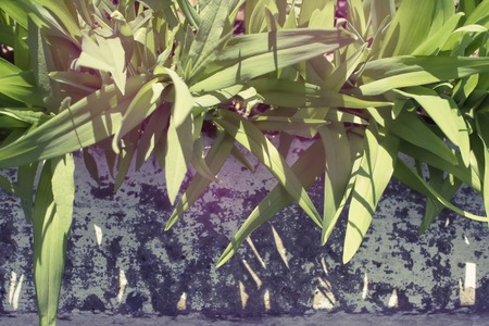 Natural background leaves plants tinting blur. The color spot pink Archivio Fotografico