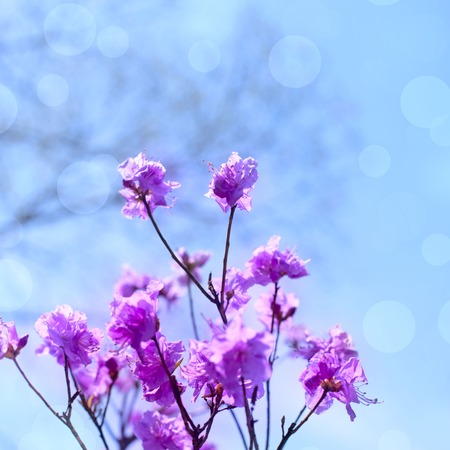 Beautiful branches with flowers rosemary on the background of the sky. Natural nature bright colors