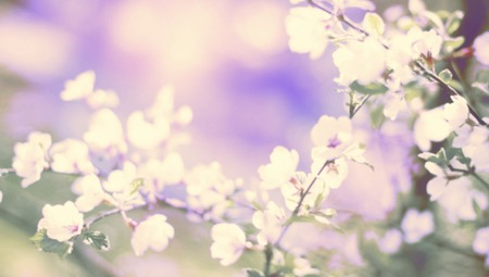 Banner Defocus natural background blurred small flowers on a branch. Pastel colors toning surrealism Stock Photo
