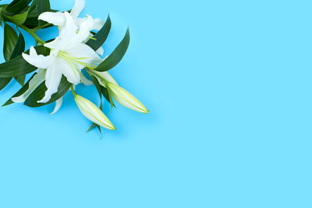 Natural bouquet of lilies on blue background. Copy space for text Stock Photo