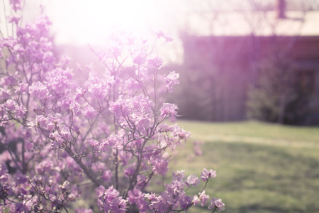 Beautiful branches with flowers rosemary on the background of the sky. Natural nature bright colors defocus Stock Photo