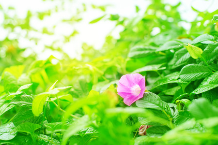 Natural green bushes flower fresh leaves in sunlight. Bright rich background selective focus toning Stock Photo