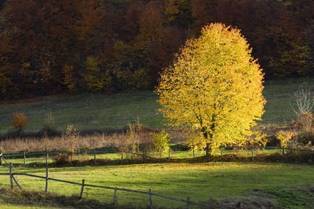 Autumn tree on a glade on the bottom of the hill with sunlight, Melina, Banja Luka, Republika Srpska, Bosnia photo