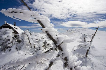 Frozen pine branches on Jahorina mountain, Republika Srpska, Bosnia photo