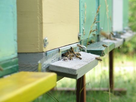 beekeeping: Macro of beehive entrance with busy bees in front Stock Photo