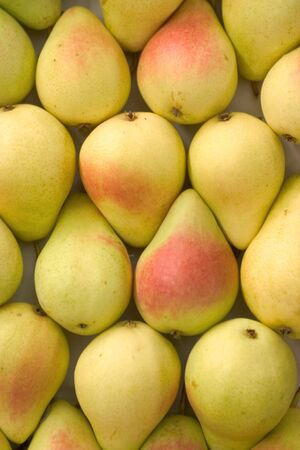 sorted: Pears sorted in box, ready for market