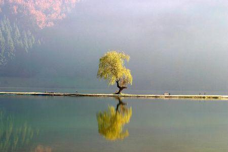 republika: Lone tree by the Balkana  lake near Mrkonjic Grad, Republika Srpska, Bosnia