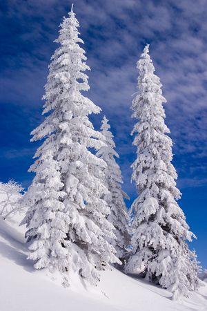 icily: Snowy landscape on Jahorina mountain near Sarajevo, Bosnia and Herzegovina, with blue sky and white clouds