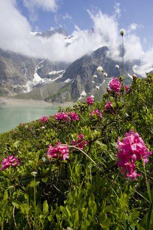 Spring Alpine herbs with green alpine lake Moserboden in background, Kaprun, Austria photo