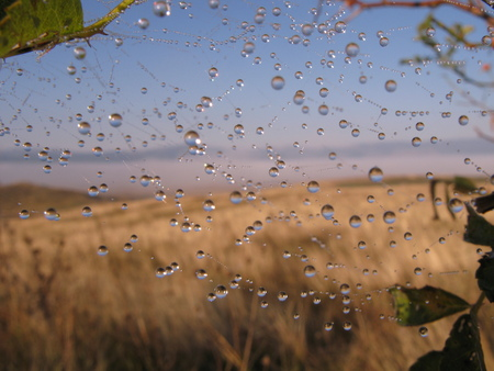 spiders web: Dew drops on spiders web