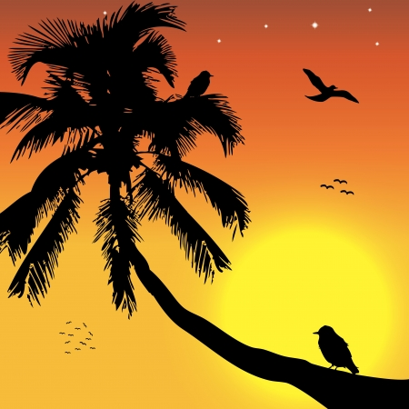 Tropical sunset with birds and palm Vector