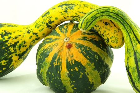 squash bug: Autumn decorative pumpkins green yellow Stock Photo