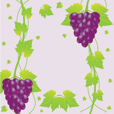 violet grapes and leaf background Stock Vector - 16002740