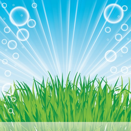 Abstract spring summer background with grass Stock Vector - 16540882