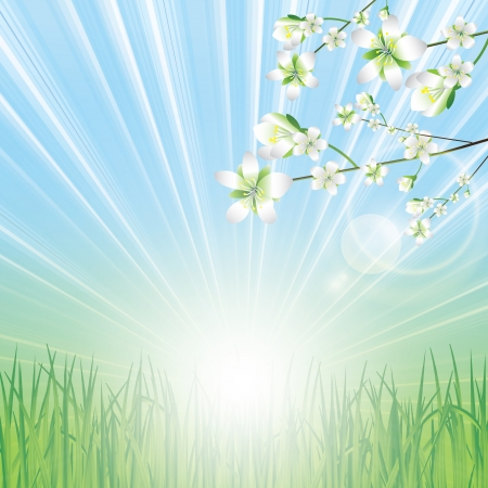 plain background: Beautiful spring background with spring flowers