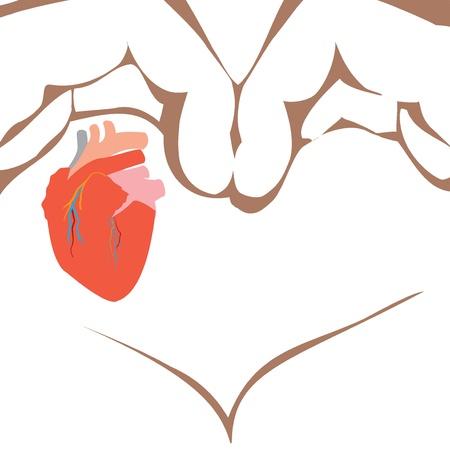 human vein heartbeat: Medical human heart illustration isolated