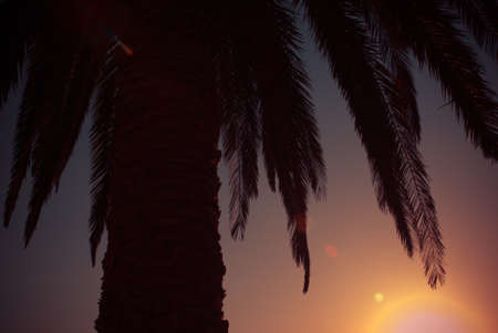 Palm and sunset creative summer view photo