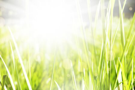 Beautiful green summer sunny background photo