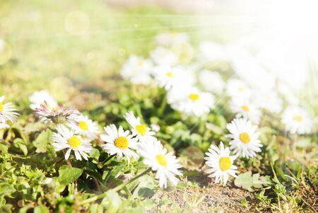 Beautiful flowers summer sunny background photo