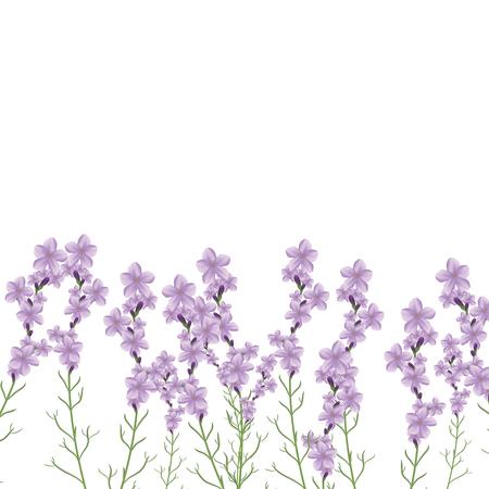 lavender oil: Realistic lavender flower vector illustration