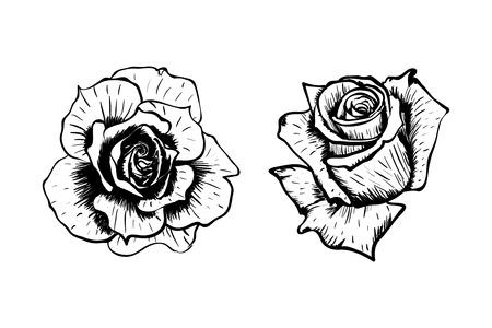 Hand getrokken vector rozen bloeien