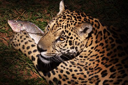 Jaguar And Fish photo