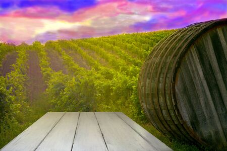 Ripe grapes on the vines in Tuscany, Italy. Picturesque winery farm, vineyard. Sunset warm light. Empty place. place for text. big wooden barrel. barrel.