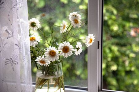 vase with daisy flowers on the window, place for text. Reklamní fotografie