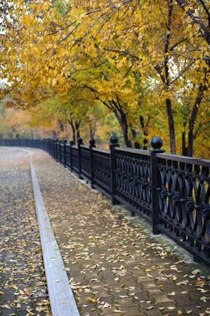 Beautiful autumn sidewalk with yellow trees background