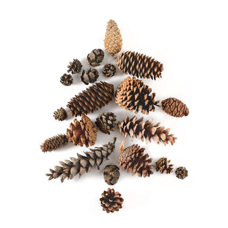 Fir-tree made of cones various coniferous trees isolated on white, view from above. Free copy space.