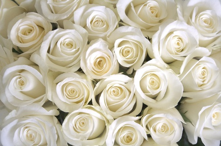 White Roses as background Stock Photo - 8999946