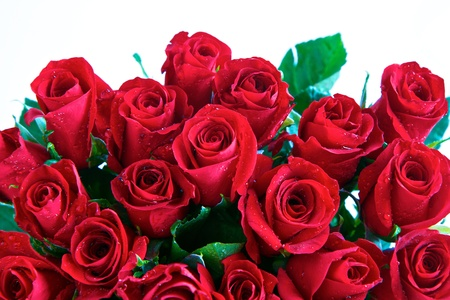 Red roses in a bunch isolated on a white background with space for text