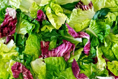Salad leaves with lettuce, radicchio, and rocket as a background Stockfoto