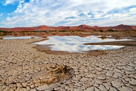 high desert: Desert scene with water and cracked earth in Namibia, Africca