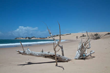 driftwood: Driftwood on exotic tropical beach