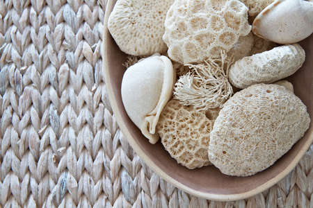Shells and coral  in a bowl photo