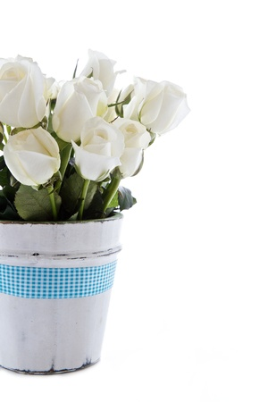 White roses with blue ribbon and isolated on a white background Stock Photo - 12604010