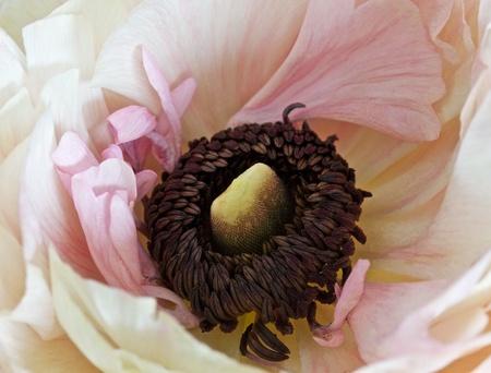 Closeup of beautiful pink flower  Stock Photo