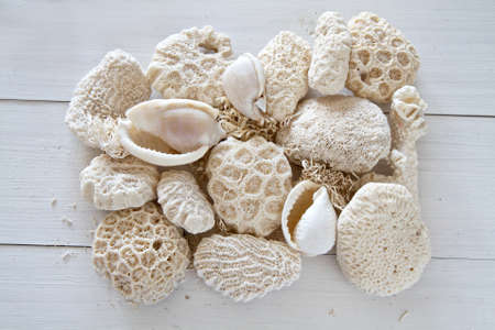 whitewashed: Collection of shells and coral on whitewashed wood